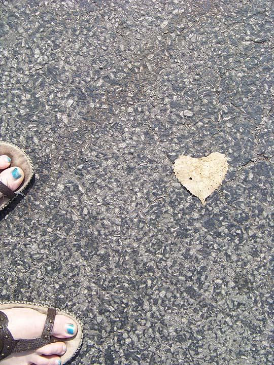 A random leaf found on the street that was shaped like a heart.