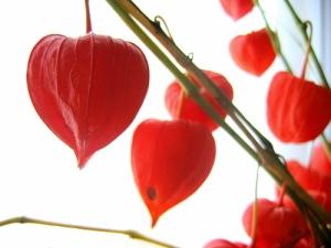 chinese.lanterns