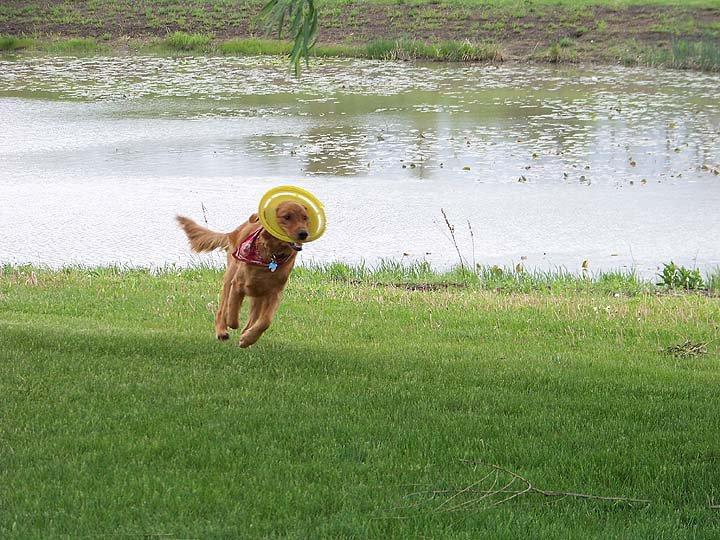 xander.frisbee